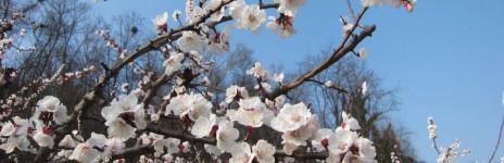 … è arrivata la primavera !!!!!