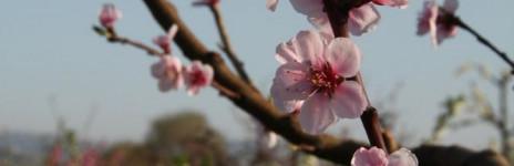 … tree in flower …