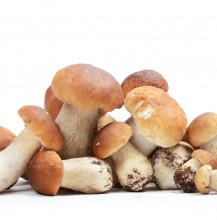 Sugo ai Funghi Porcini
