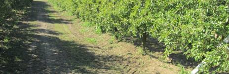 Siccità ed irrigazione