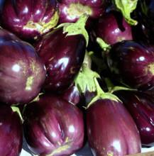 Eggplant farmer