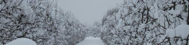 … la neve è caduta copiosa …