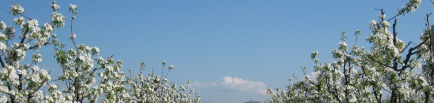 Le mille fioriture